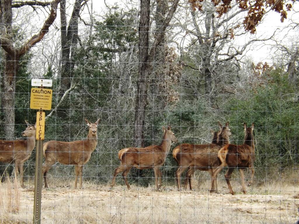 0 Hwy 90 Property Photo - Waelder, TX real estate listing
