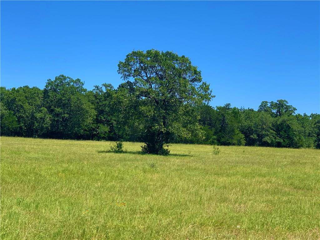 TBD FM 2237 Property Photo - Flatonia, TX real estate listing