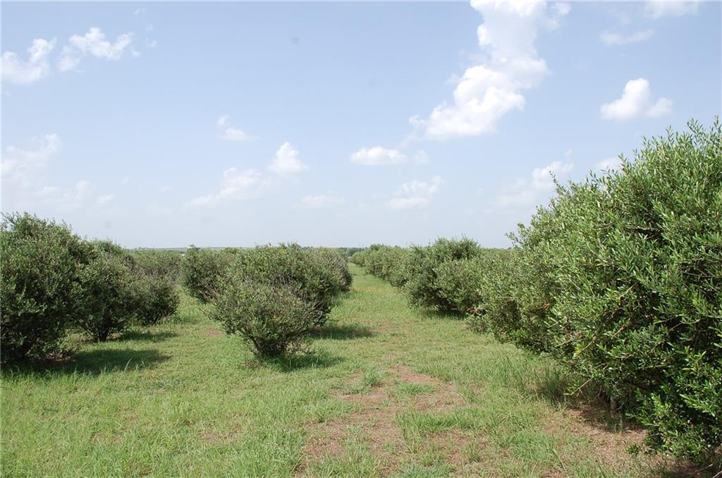 780 County Rd 330, Granger TX 76530 Property Photo - Granger, TX real estate listing