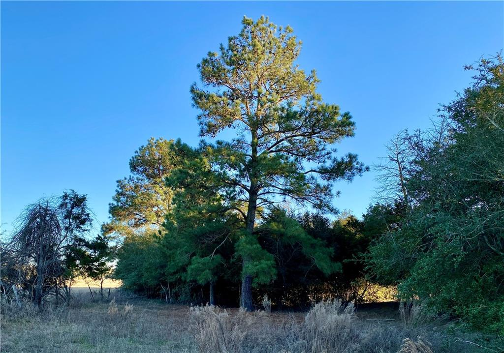 00 CR 107 (TRACT 2) Property Photo - Lincoln, TX real estate listing