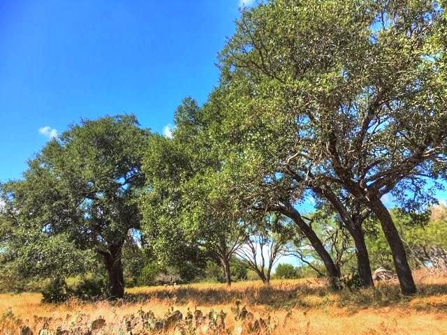 2W Tract 2 County Road 2200 Property Photo - Lometa, TX real estate listing
