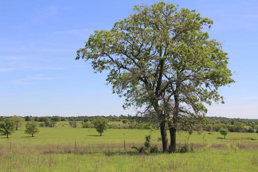 Tbd Tract 1 Antioch Road, Smithville Tx 78957 Property Photo