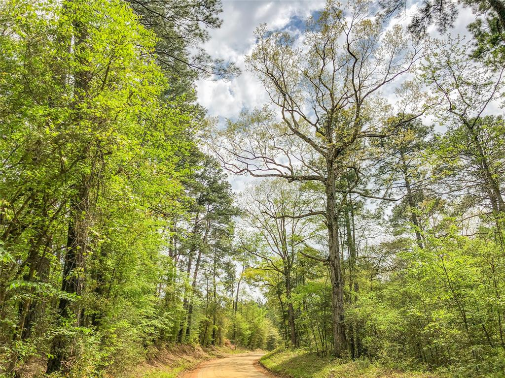 0000 County Rd 2107, Burkeville, TX 75932 - Burkeville, TX real estate listing