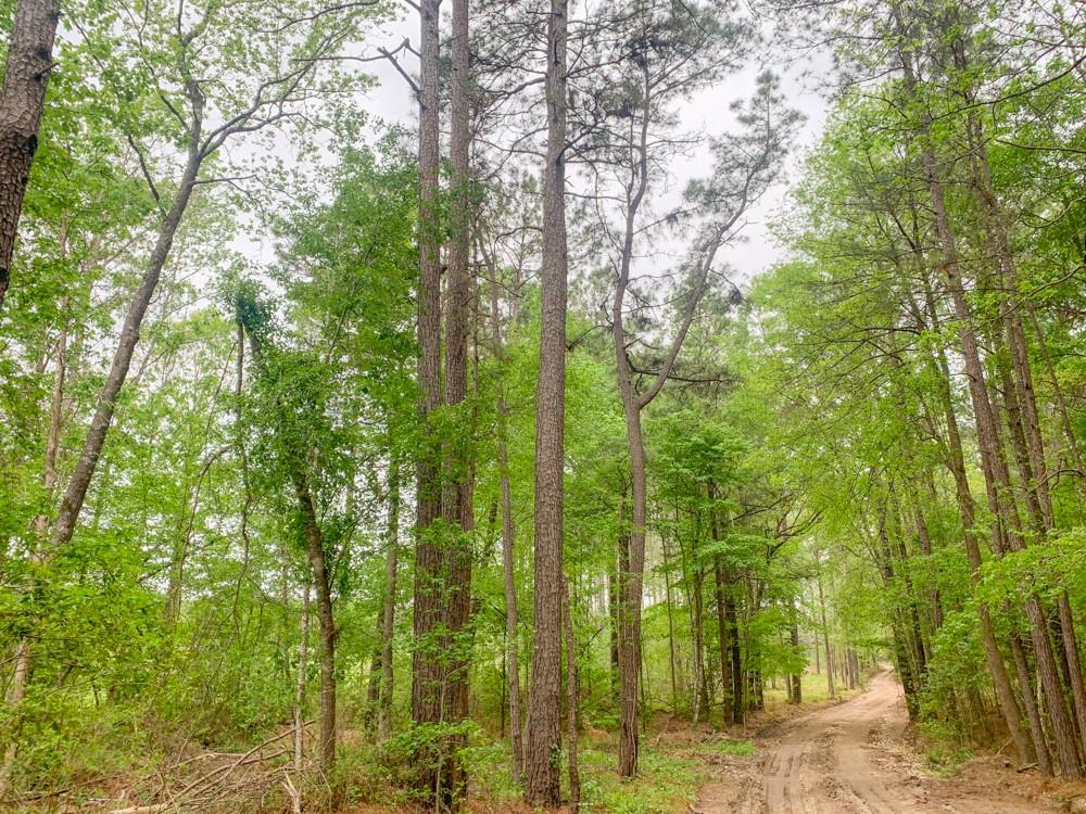 0 Union Springs Rd Property Photo - Corrigan, TX real estate listing