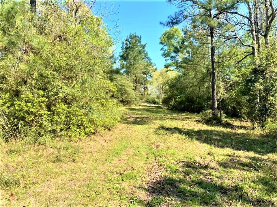 19 Acres PR 8385 Property Photo - Hillister, TX real estate listing