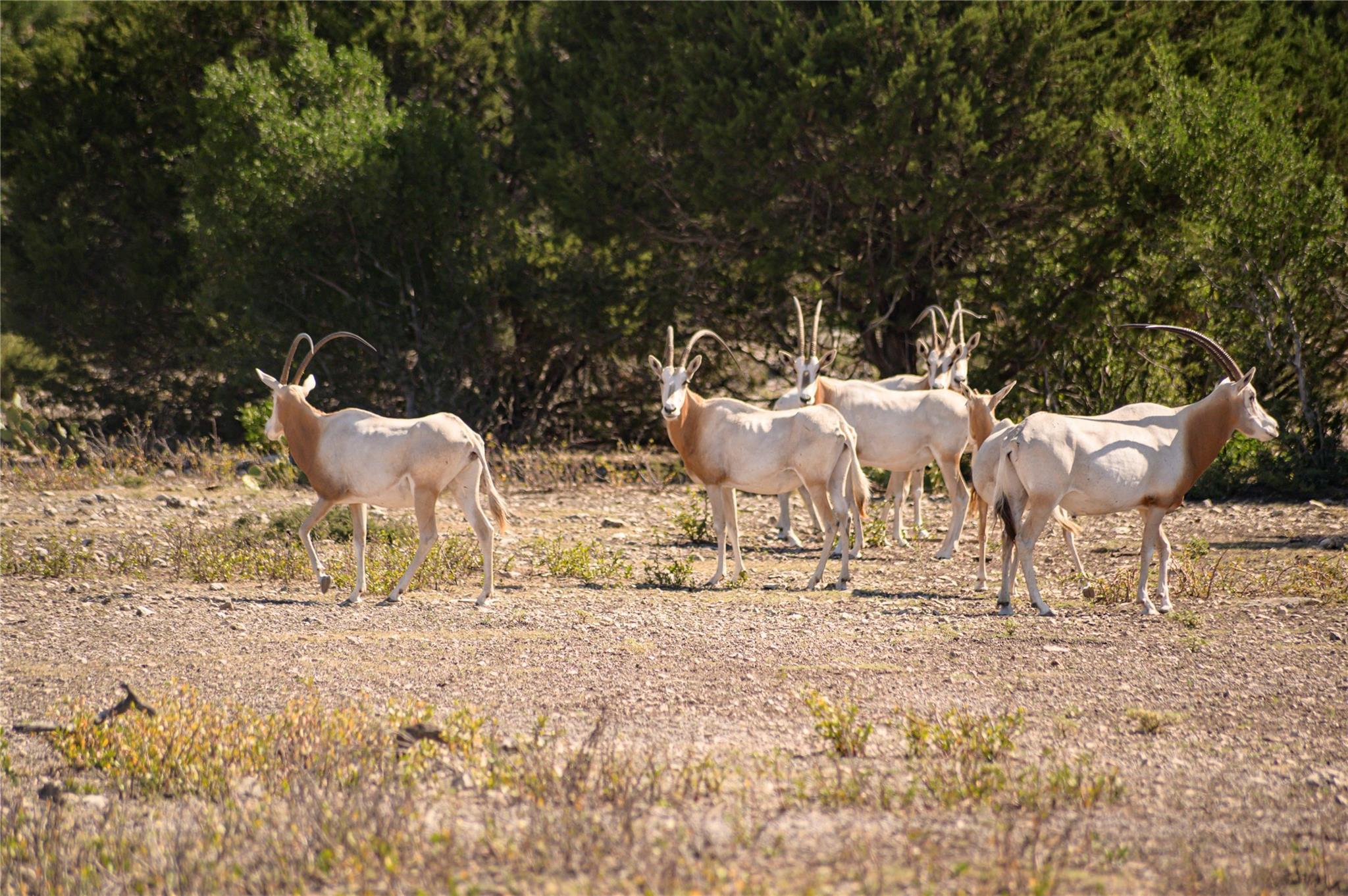 7355 Rockspringa Ranch RD N Property Photo - Rocksprings, TX real estate listing