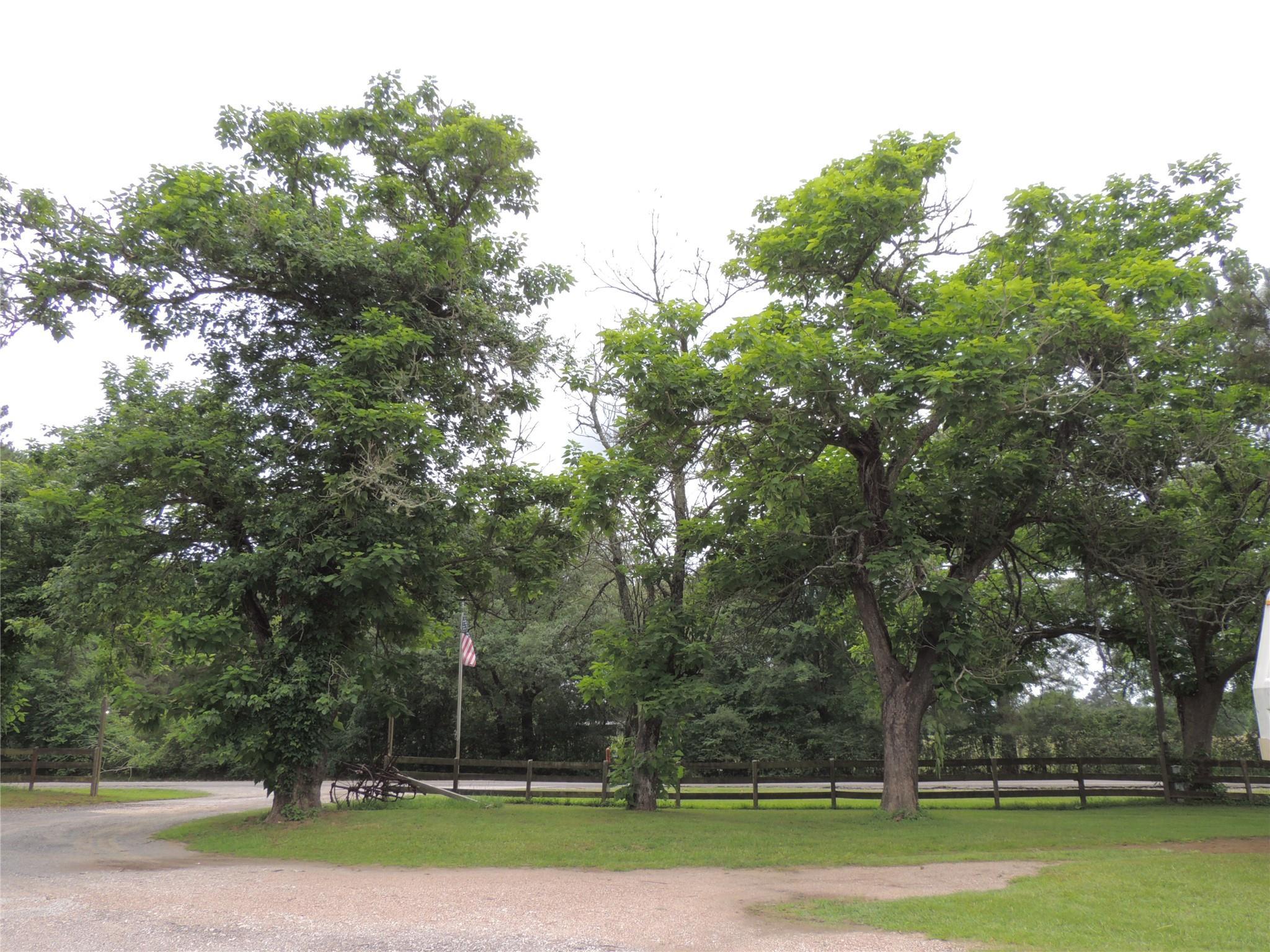 16983 Fm 1774 Property Photo