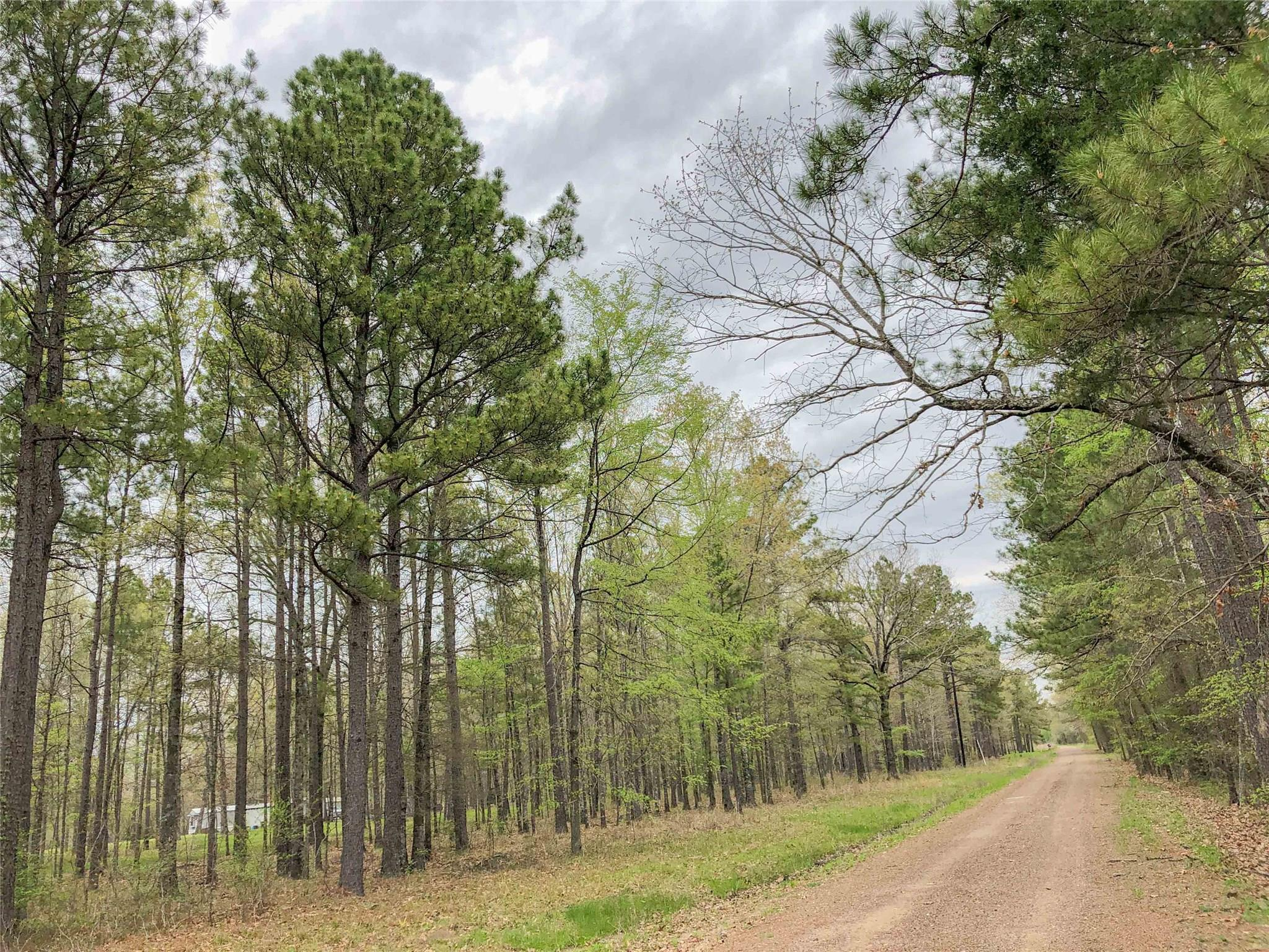 0 County Rd 4223 Property Photo - Simms, TX real estate listing