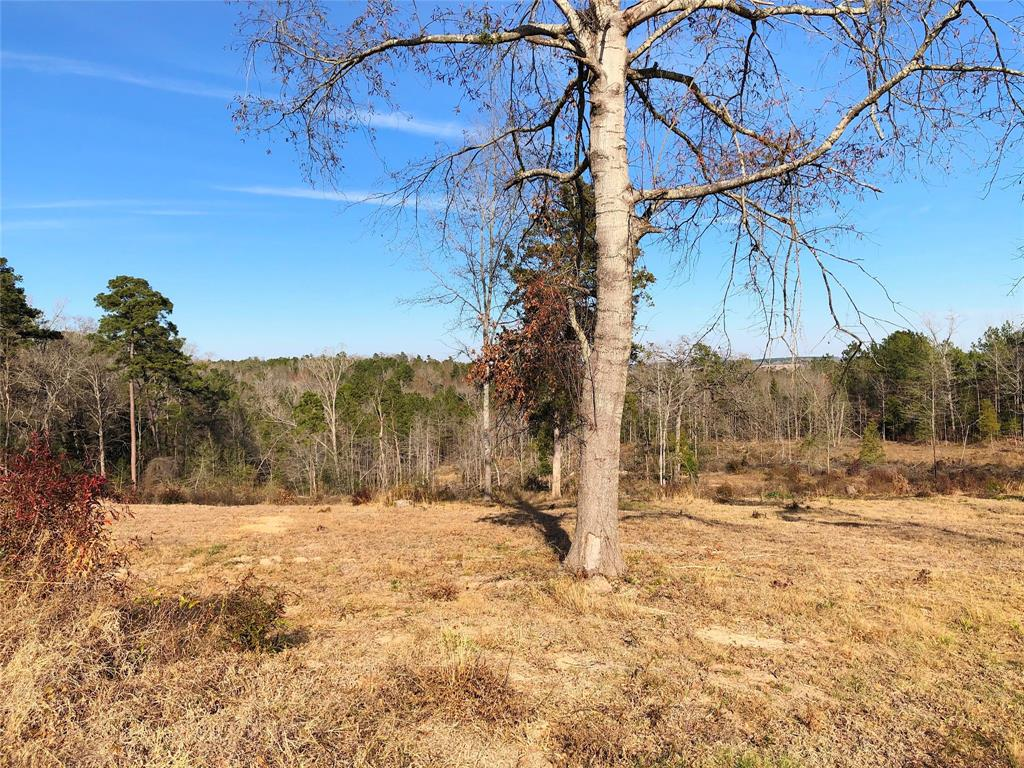 5876 County Road 447 W Property Photo - Laneville, TX real estate listing