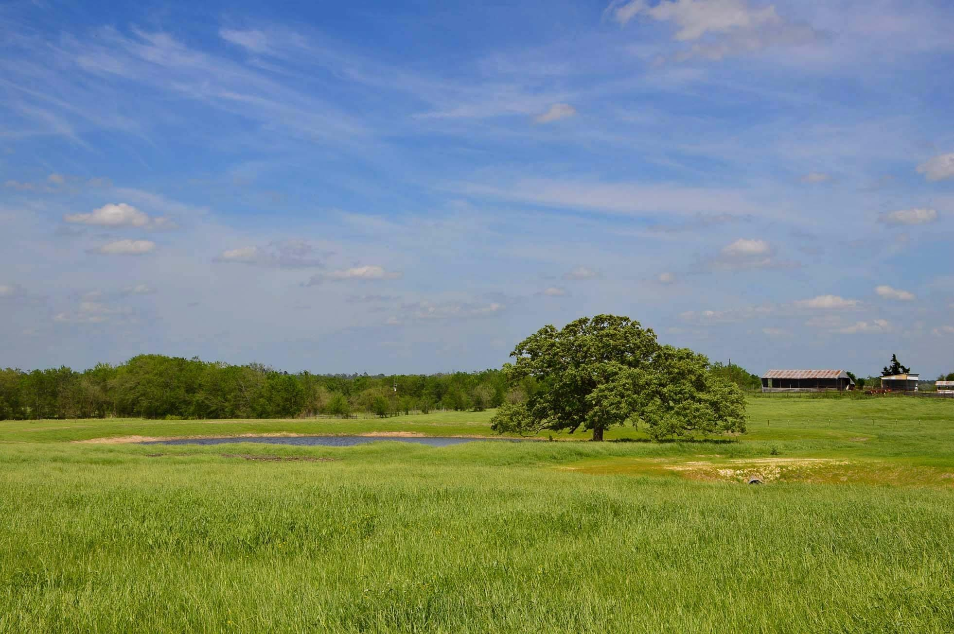 TBD FM 149 Property Photo - Anderson, TX real estate listing
