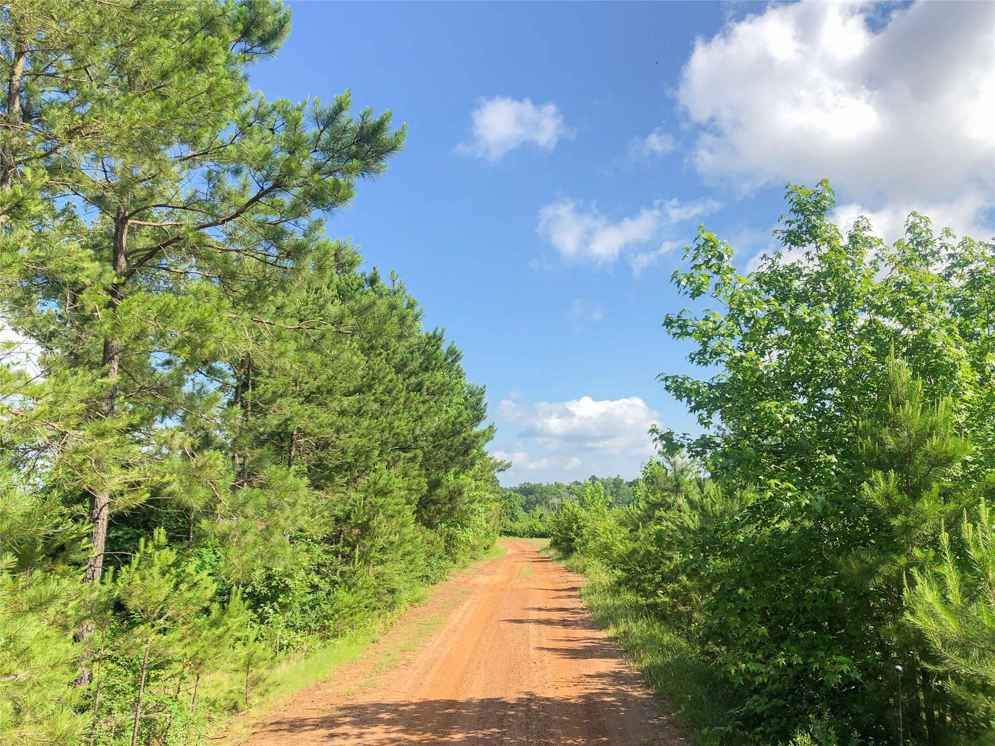 0 Beaver Bend Road Property Photo - Gilmer, TX real estate listing