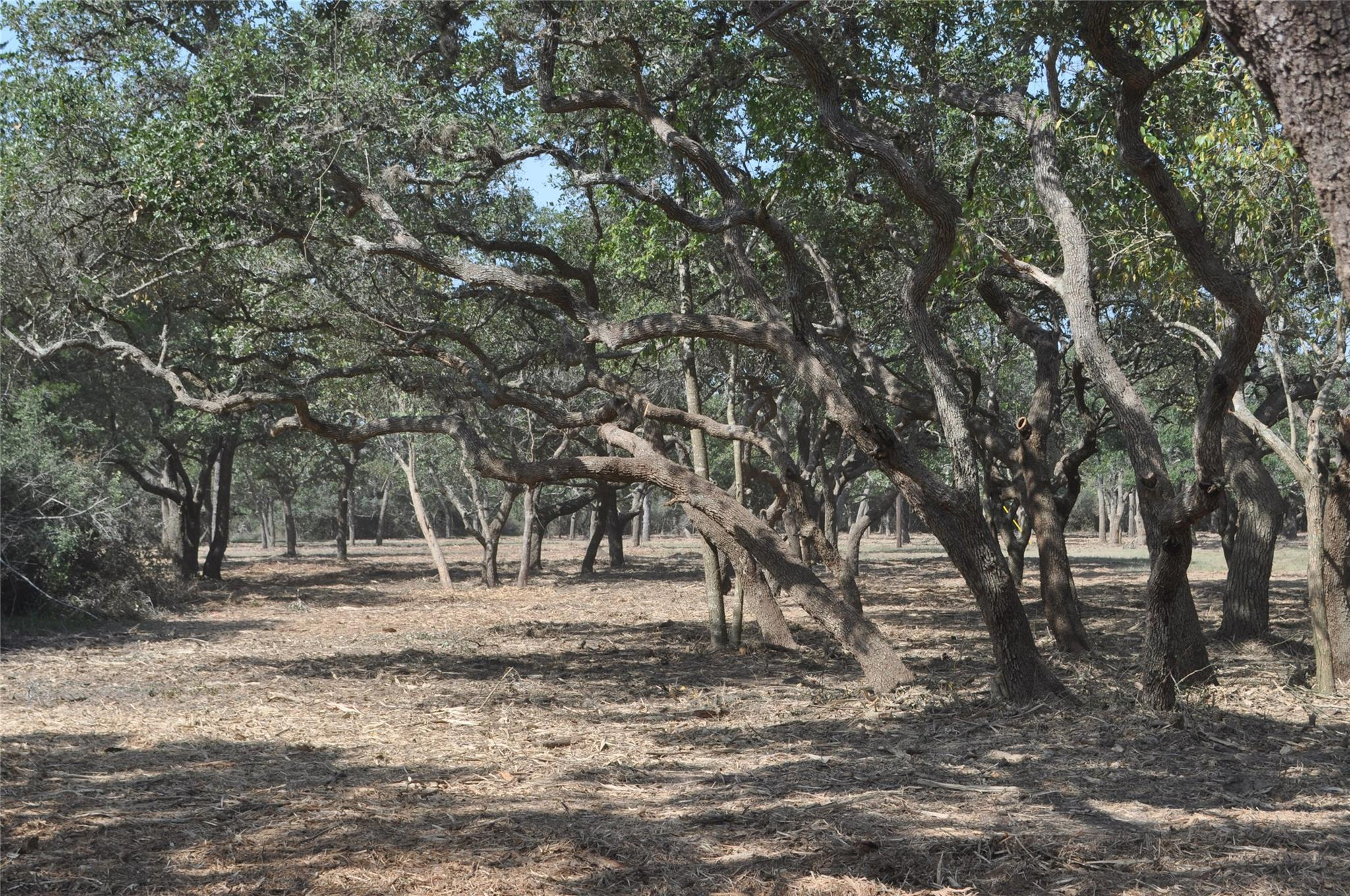 TBD Farm To Market 1447 Property Photo - Yoakum, TX real estate listing