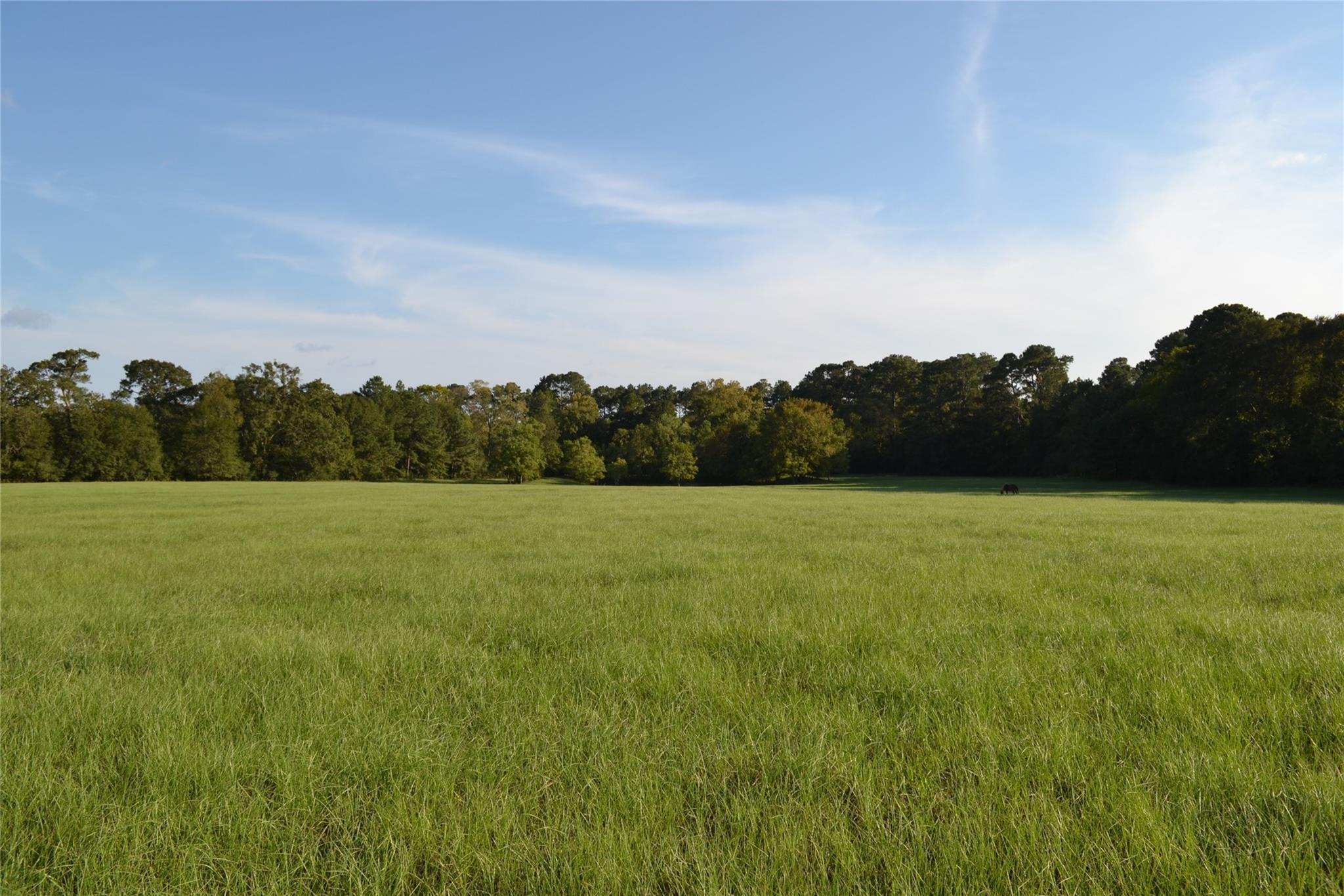 12509 County Road 201 Property Photo - Plantersville, TX real estate listing