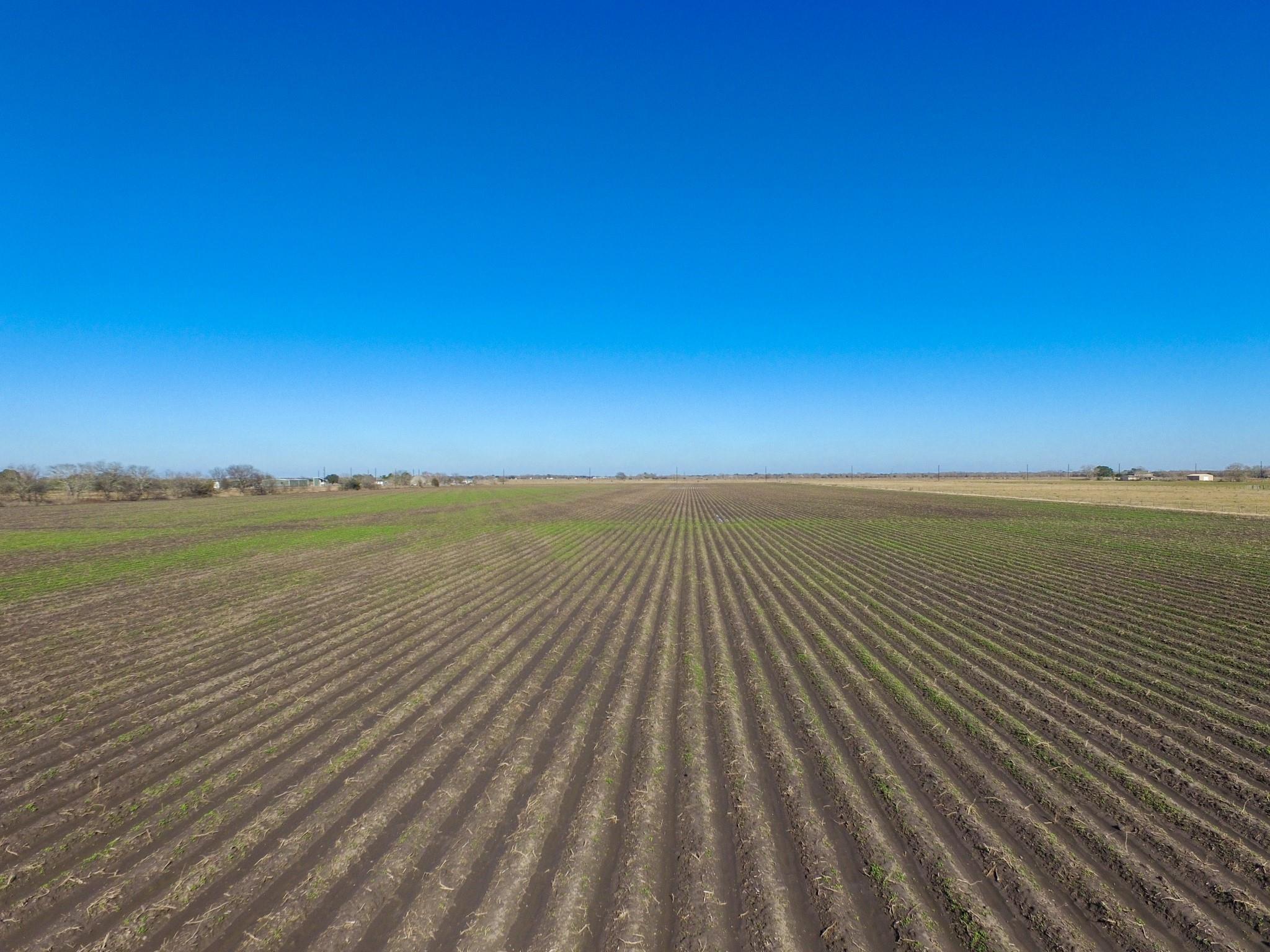000 Hamlink Road Property Photo - Beasley, TX real estate listing