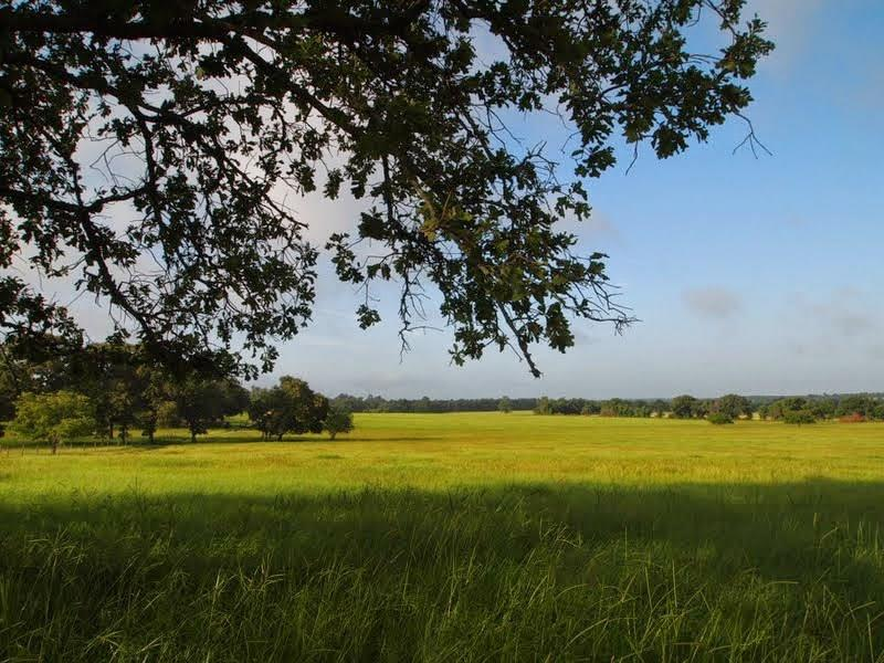 TBD W Farm To Market 227, Grapeland, TX 75844 - Grapeland, TX real estate listing