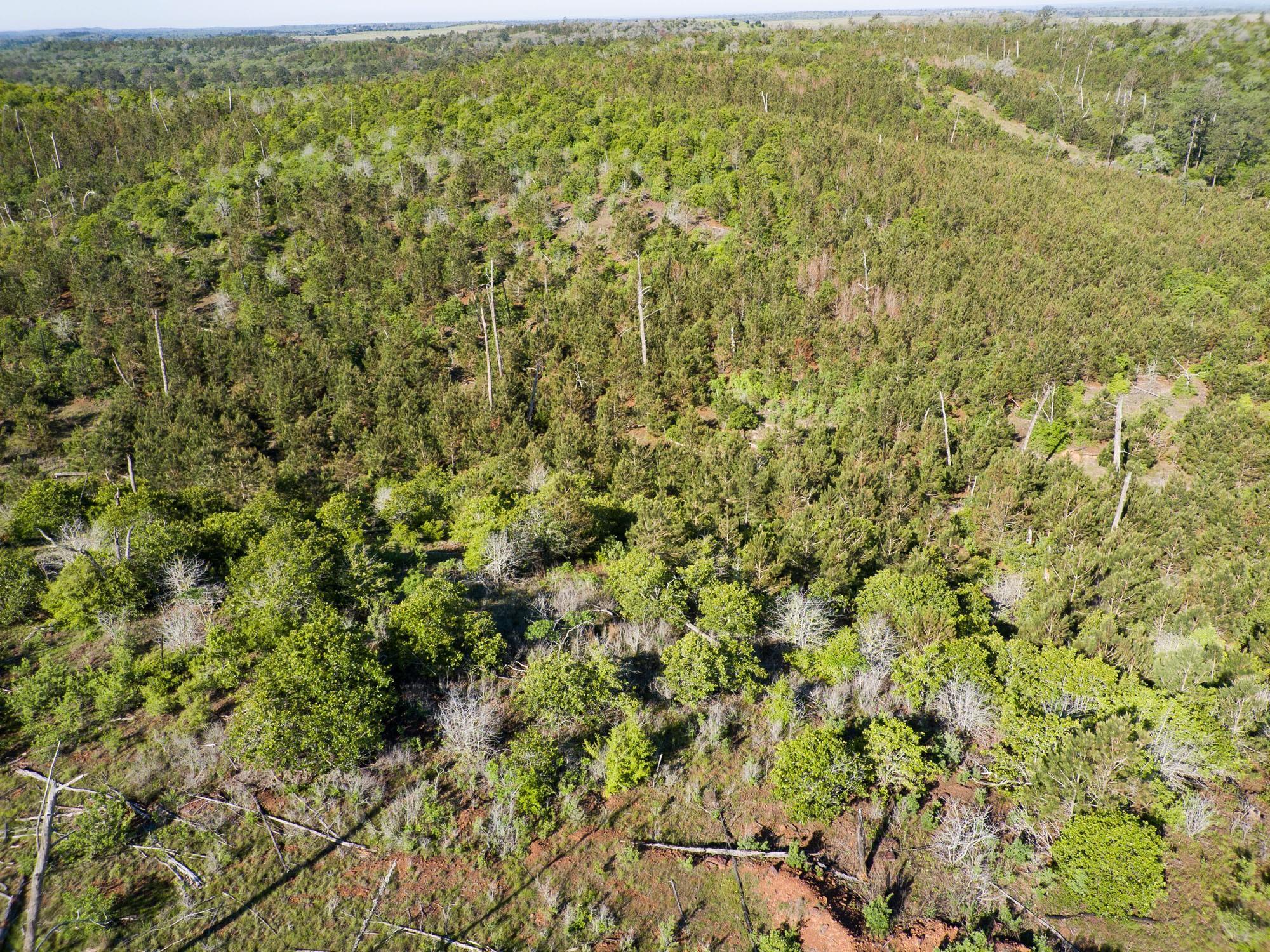 1026 Pine Gap Drive Property Photo