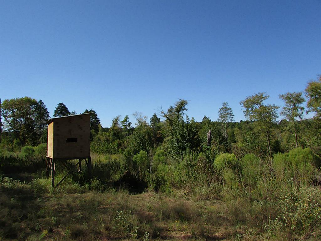 2521 Fm 228 Property Photo - Grapeland, TX real estate listing