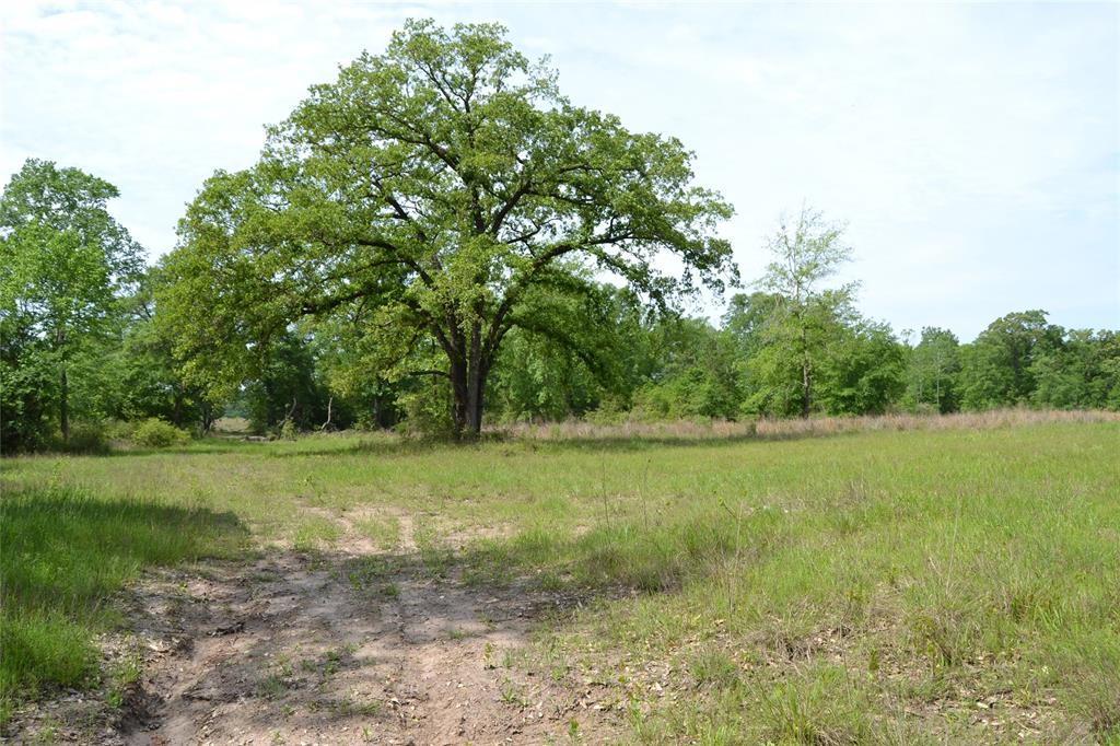 TBD CR 3530 Property Photo - Lovelady, TX real estate listing