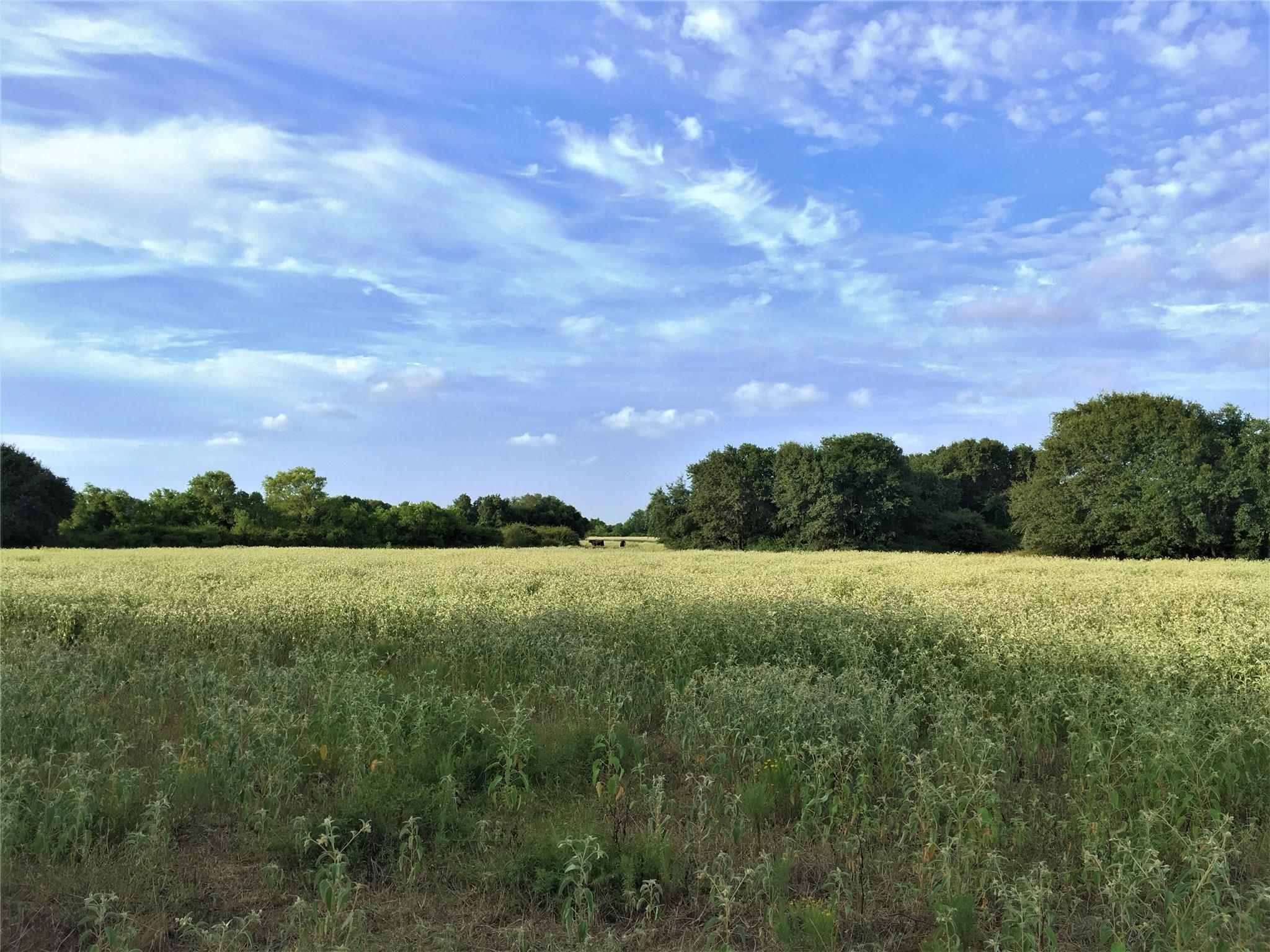 1 FM 647 Property Photo - Louise, TX real estate listing