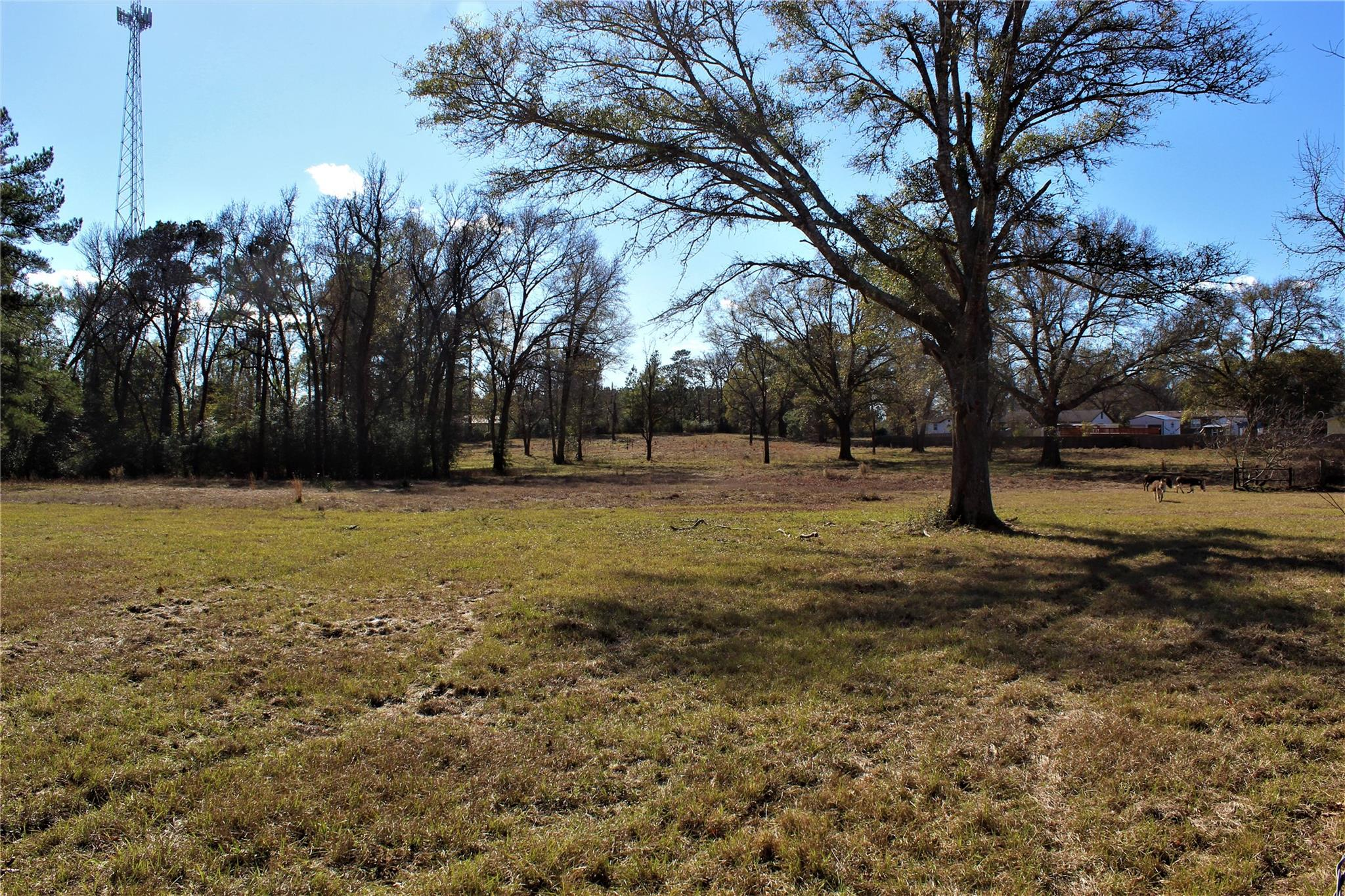TBD Windham Ranch Road Property Photo - Goodrich, TX real estate listing