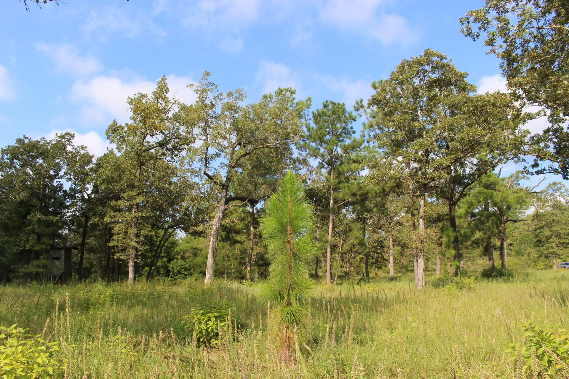 10 Ac HWY 980 Property Photo - Oakhurst, TX real estate listing