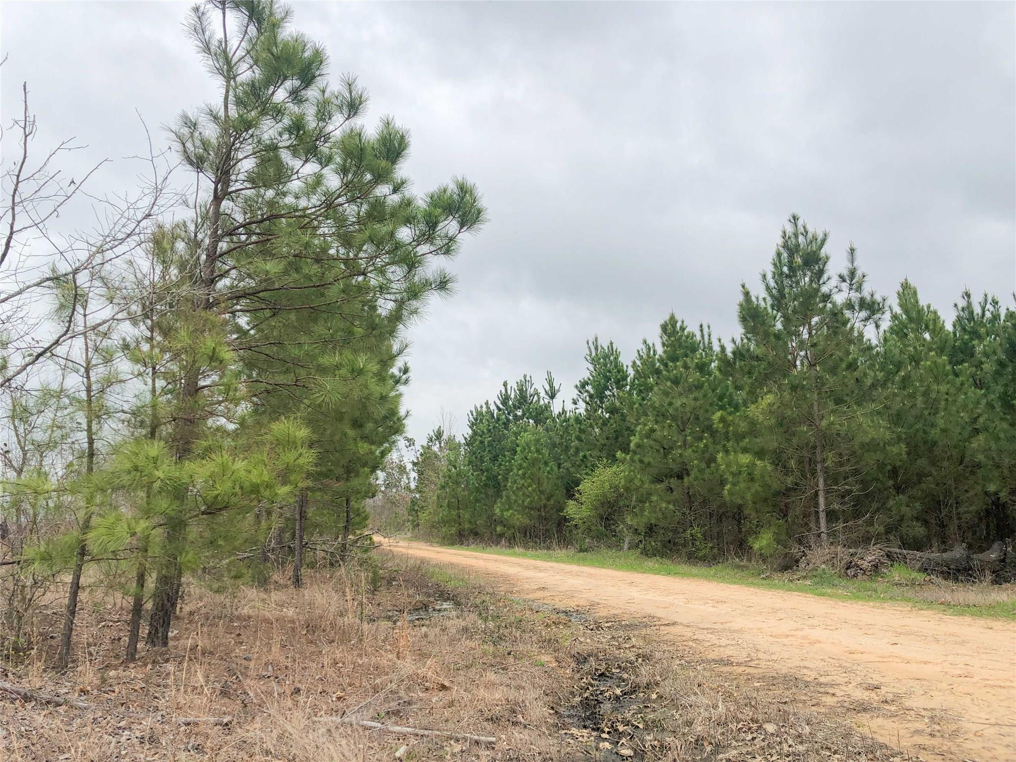 00000 CR 4450 Property Photo - Avery, TX real estate listing