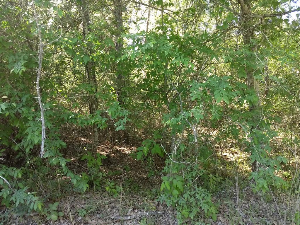 0000 Lakeview Drive W Property Photo - Plantersville, TX real estate listing
