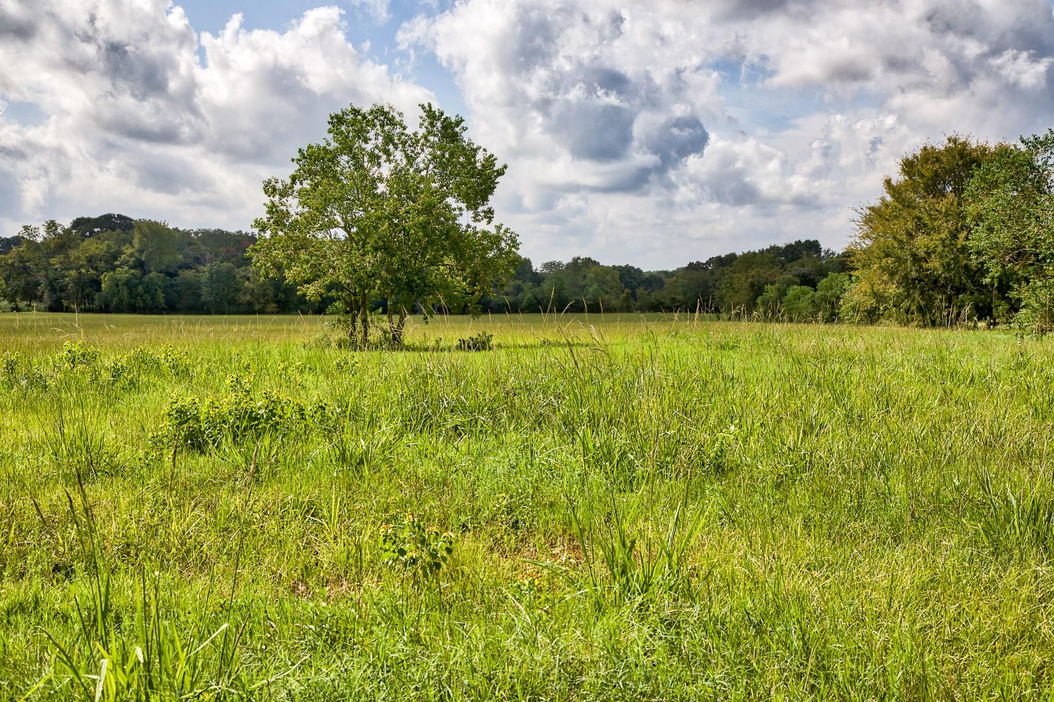 20 County Road 202 Property Photo - Plantersville, TX real estate listing