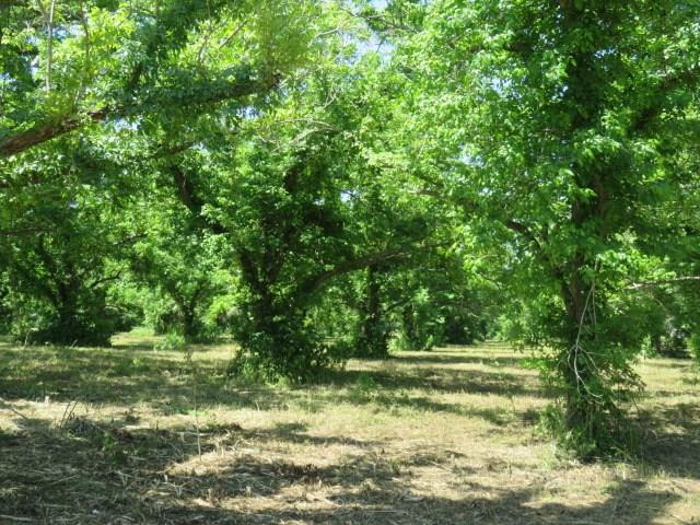 3047 S County Rd 267 Property Photo - Elm Grove, TX real estate listing