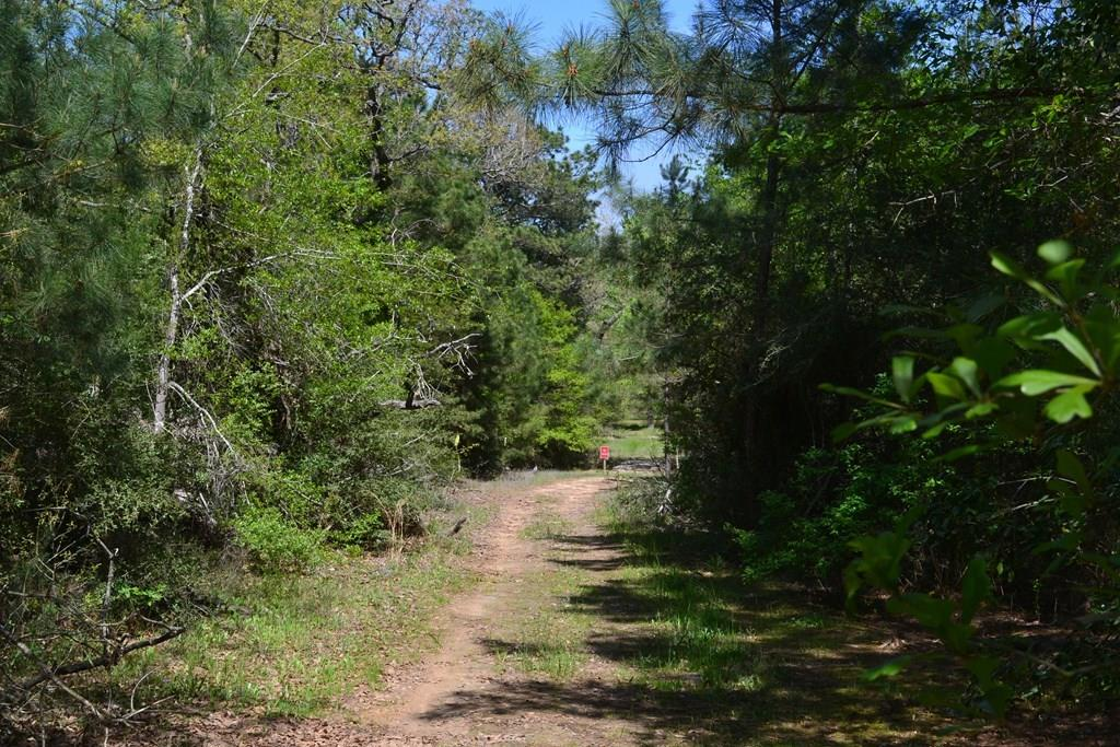 00 CR 2045 Property Photo - Crockett, TX real estate listing