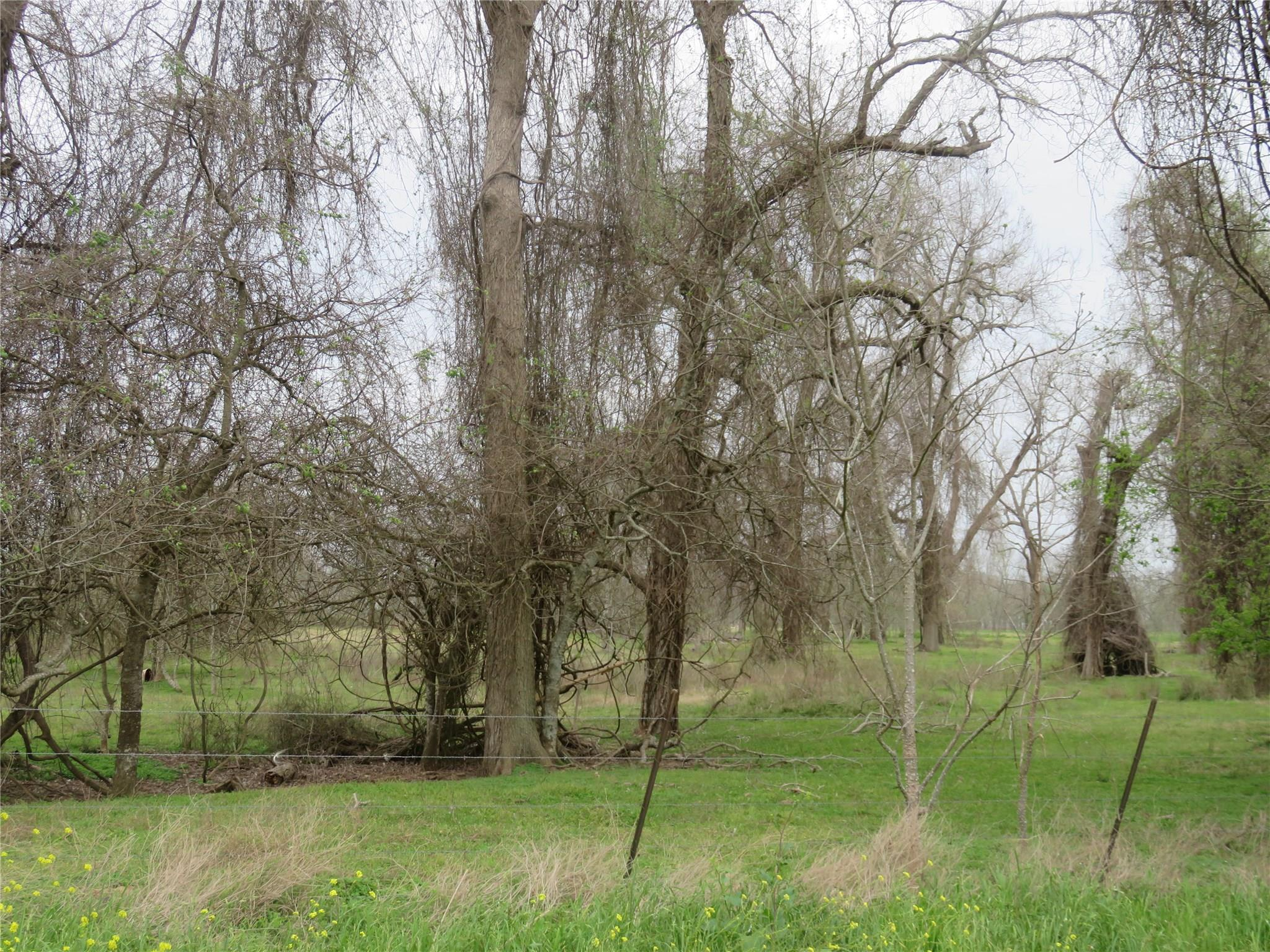 0 County Rd 269 Property Photo - Elm Grove, TX real estate listing