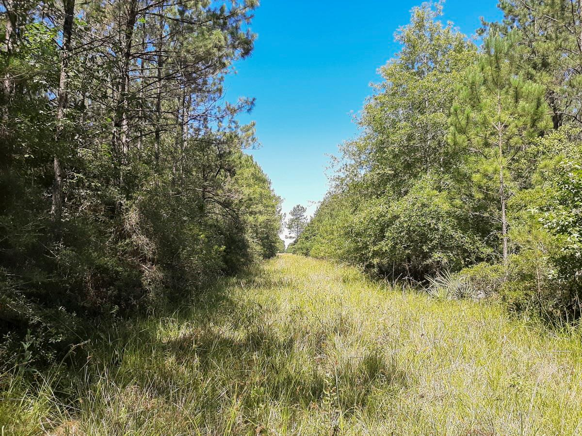000 Pinewood Forest Property Photo - Devers, TX real estate listing