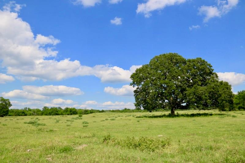 TBD (679 AC) CR 446 Property Photo - Navasota, TX real estate listing