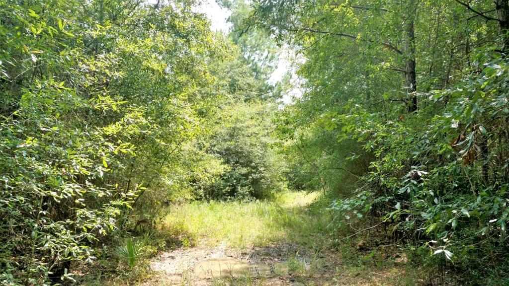 TBD Garcia Road S Property Photo - Saratoga, TX real estate listing