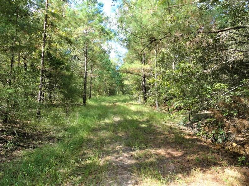 TBD County Rd 236, Oakwood, TX 75855 - Oakwood, TX real estate listing