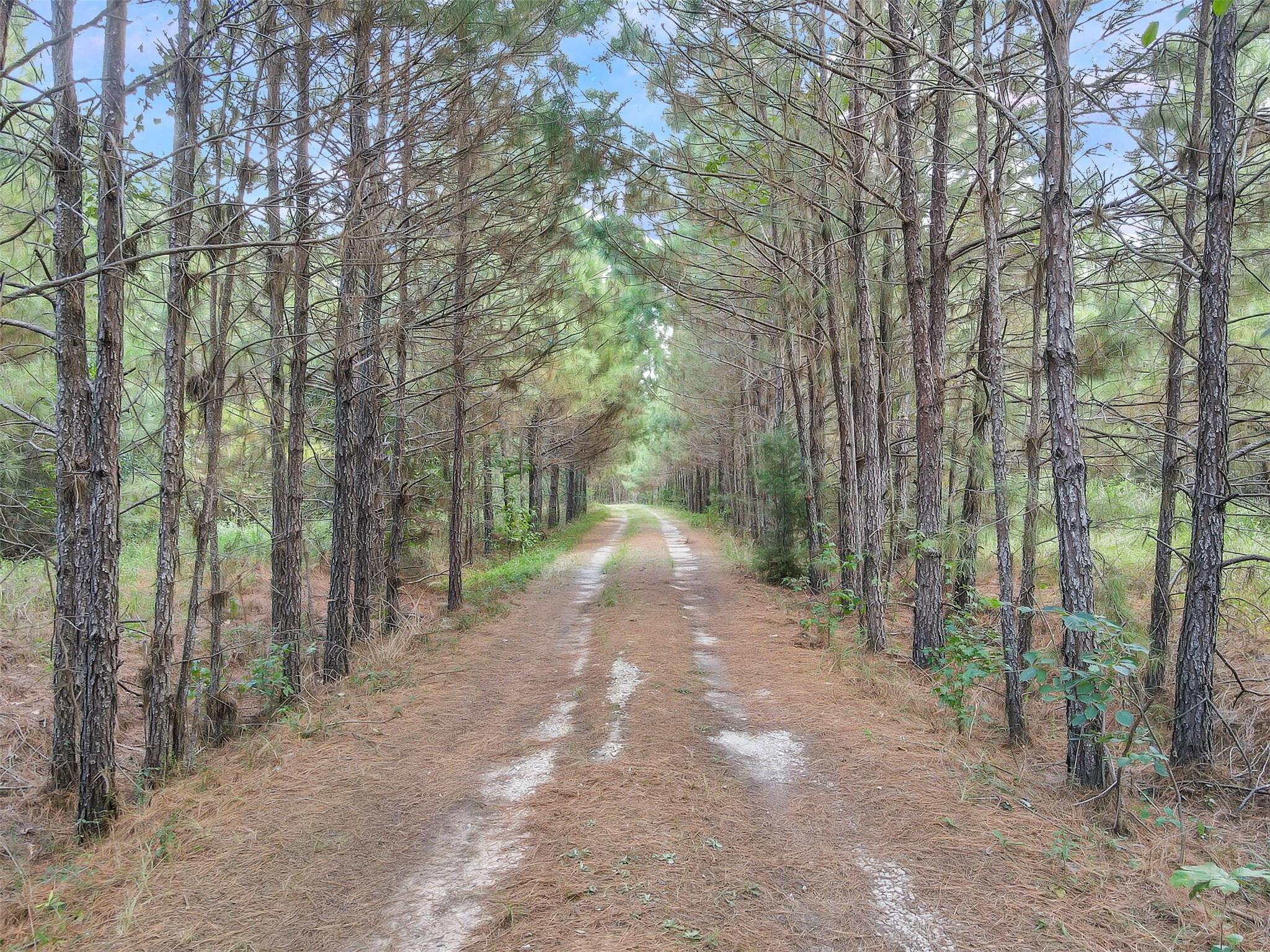 1496 Perkins Ranch Road Property Photo - Onalaska, TX real estate listing