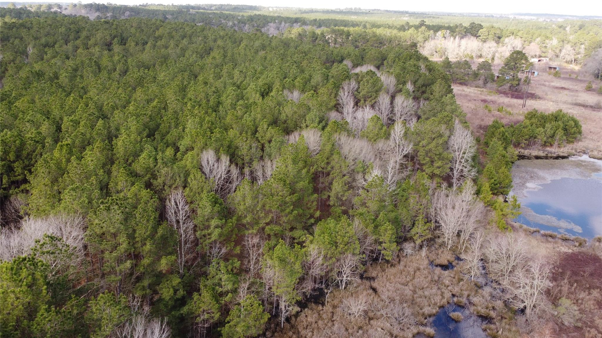 11944 Amberwood Drive Property Photo - Dobbin, TX real estate listing
