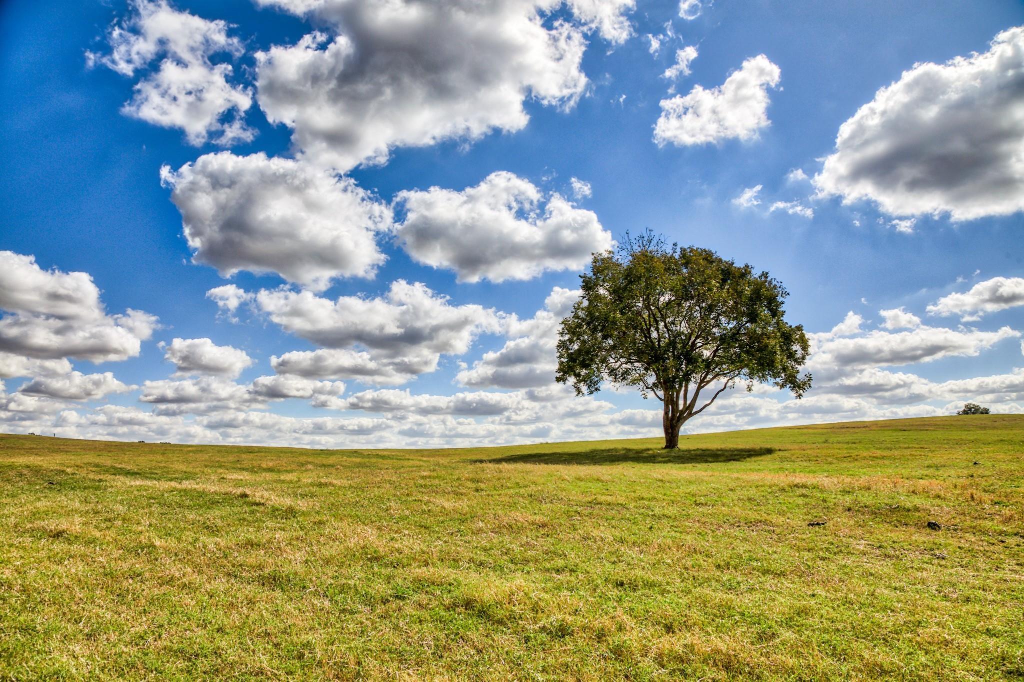 00 Tract A Farm To Market 2447 E Property Photo