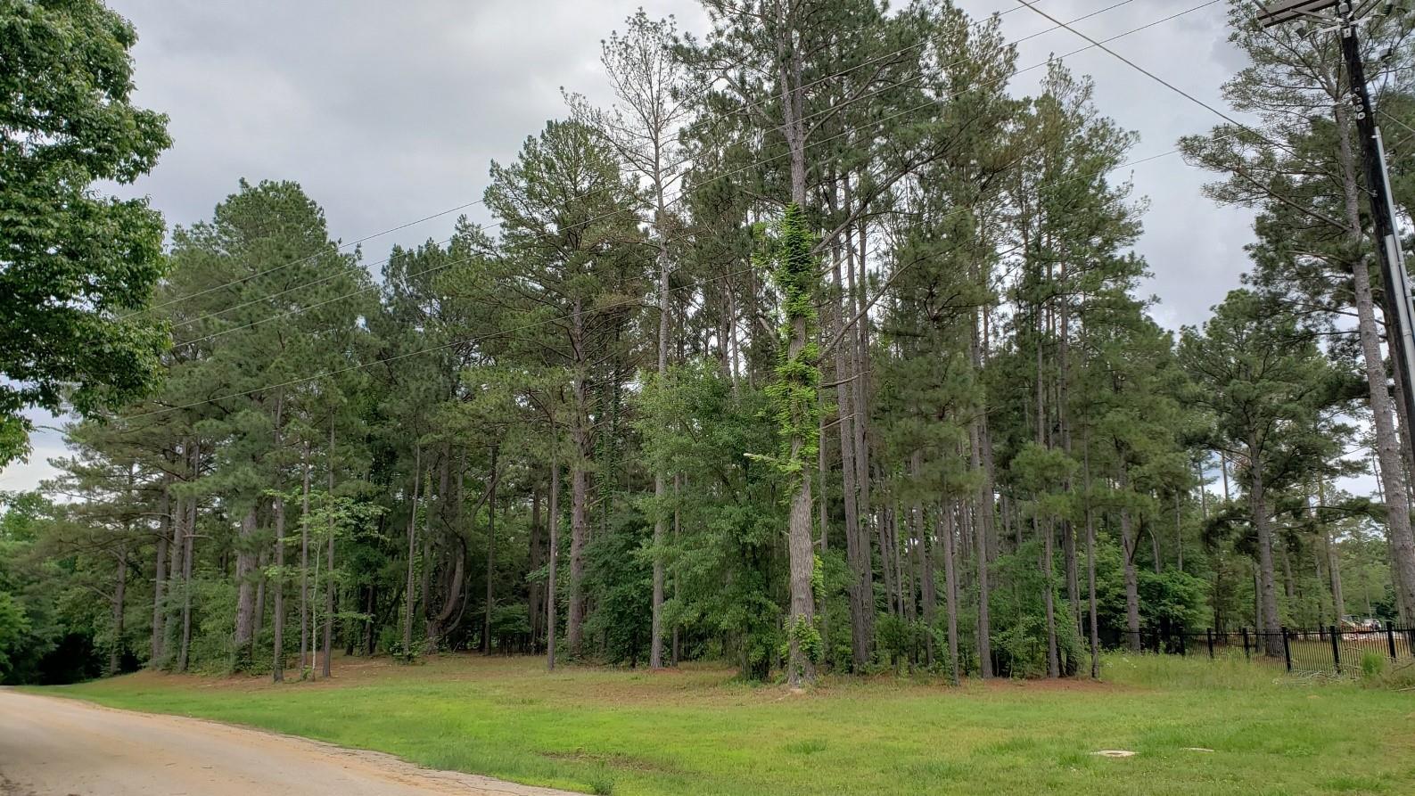 22540 County Road 1174 Property Photo