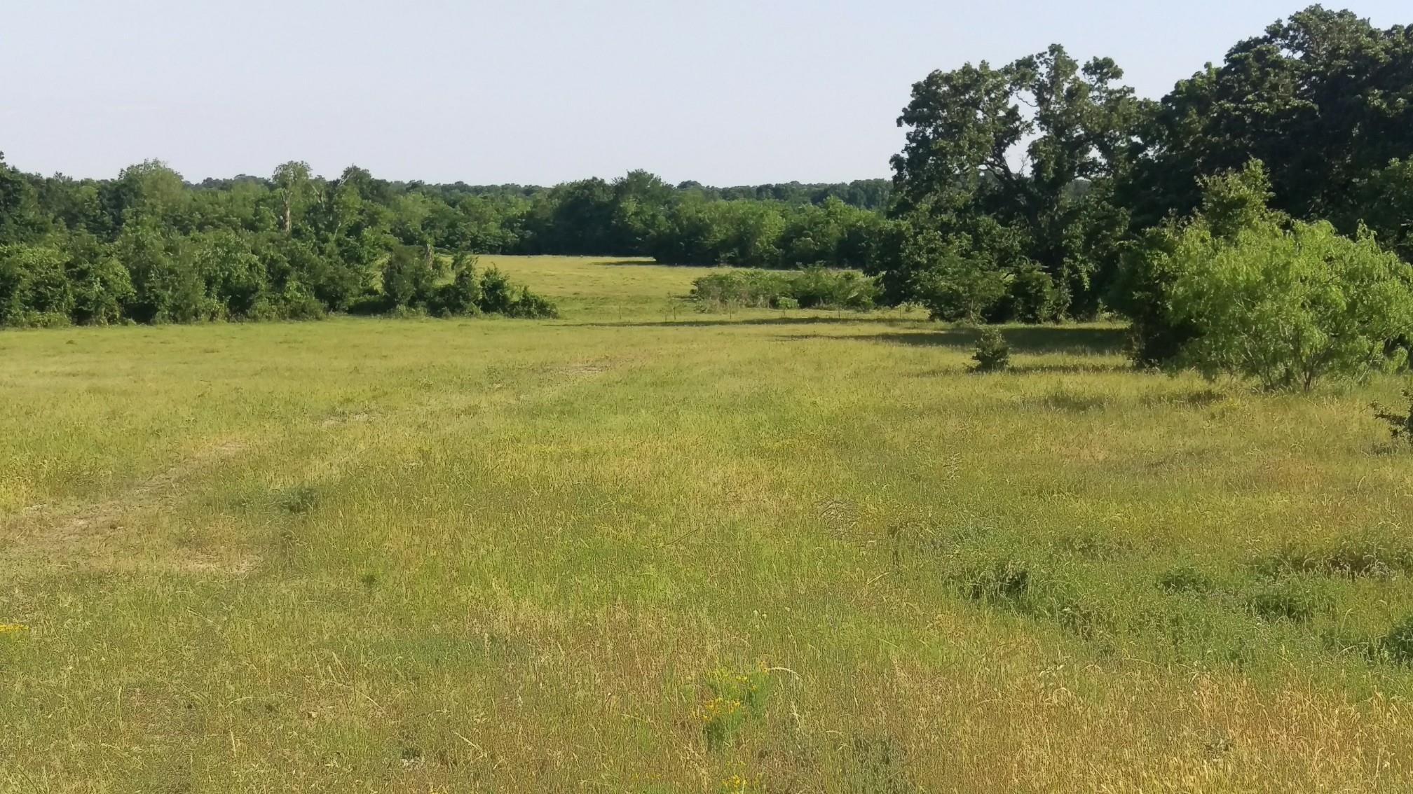 TBD Leaning Oaks Lane Property Photo - Anderson, TX real estate listing