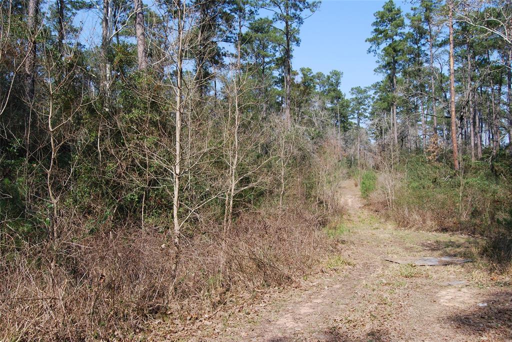 000 Brennan Thornwood Property Photo - Magnolia, TX real estate listing