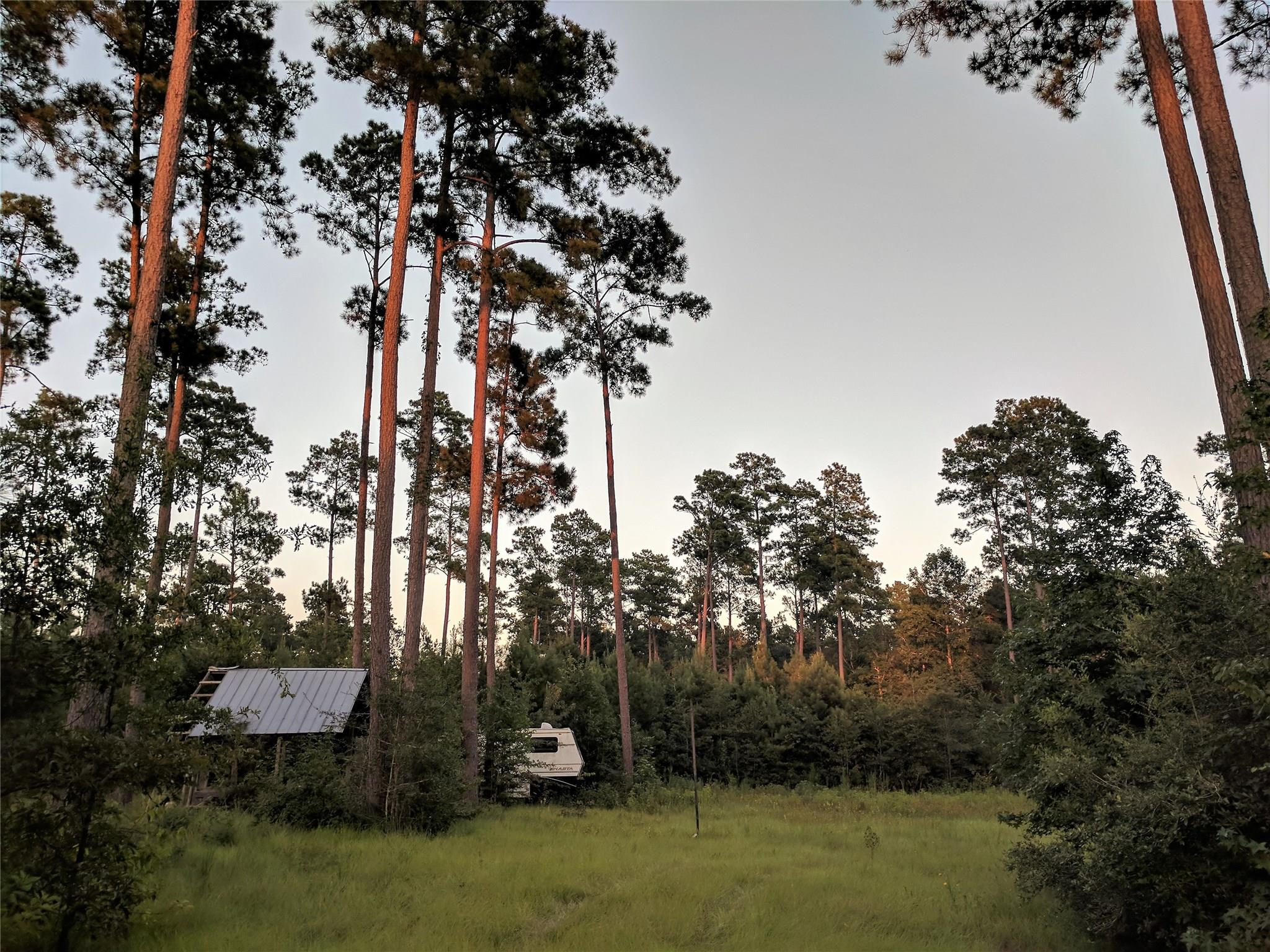 TBD CR 1340 Property Photo - Warren, TX real estate listing