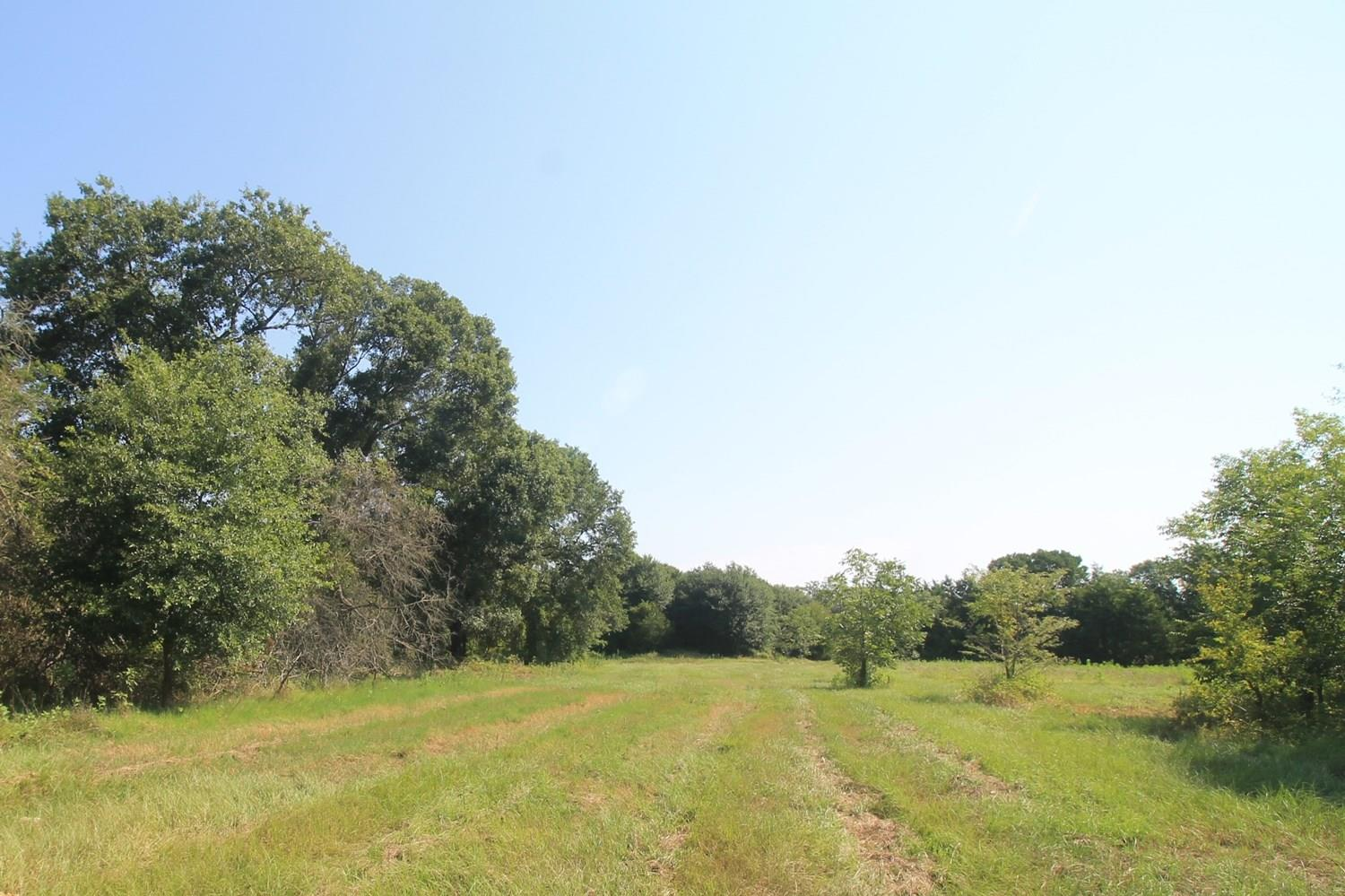 TBD Tract 1 County Road 119 Property Photo - Caldwell, TX real estate listing
