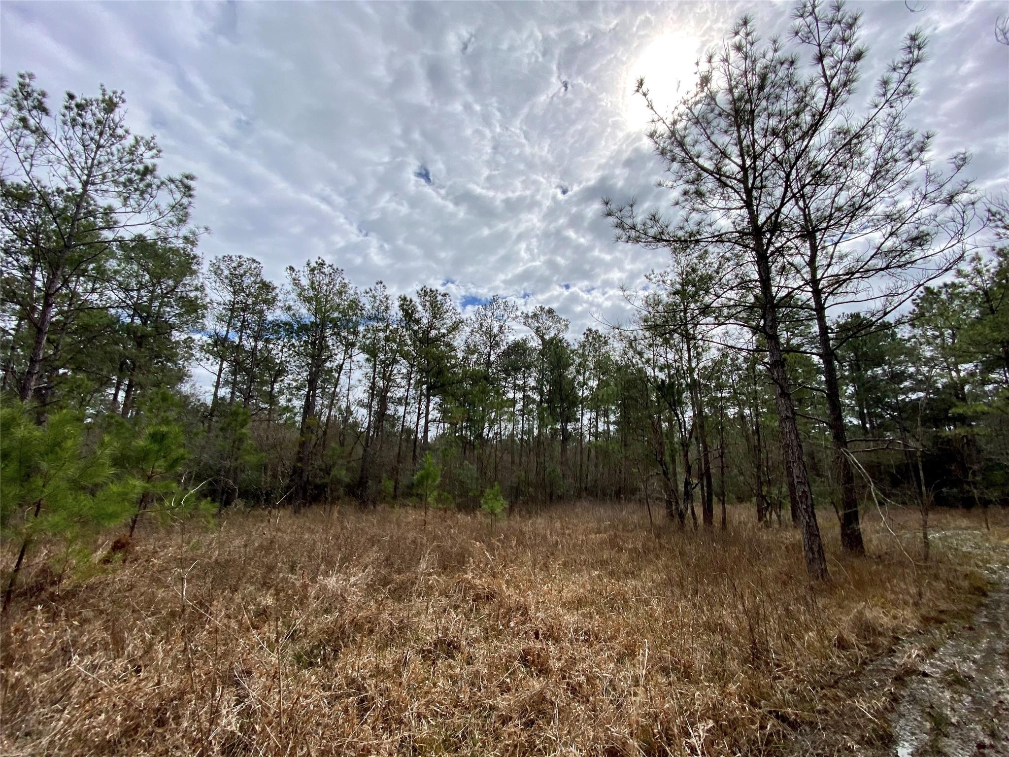 TBD Highway 105 Property Photo - Sour Lake, TX real estate listing
