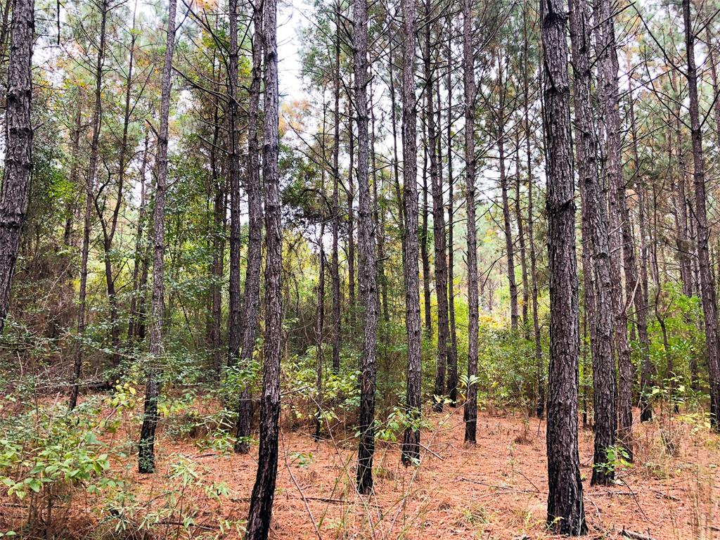 0 Nichols Creek Road Property Photo - Deweyville, TX real estate listing
