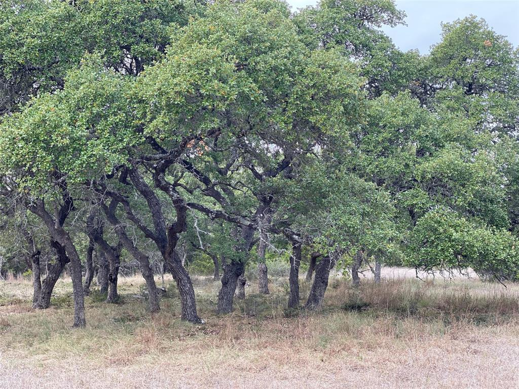 162 Flanders Property Photo - Fischer, TX real estate listing