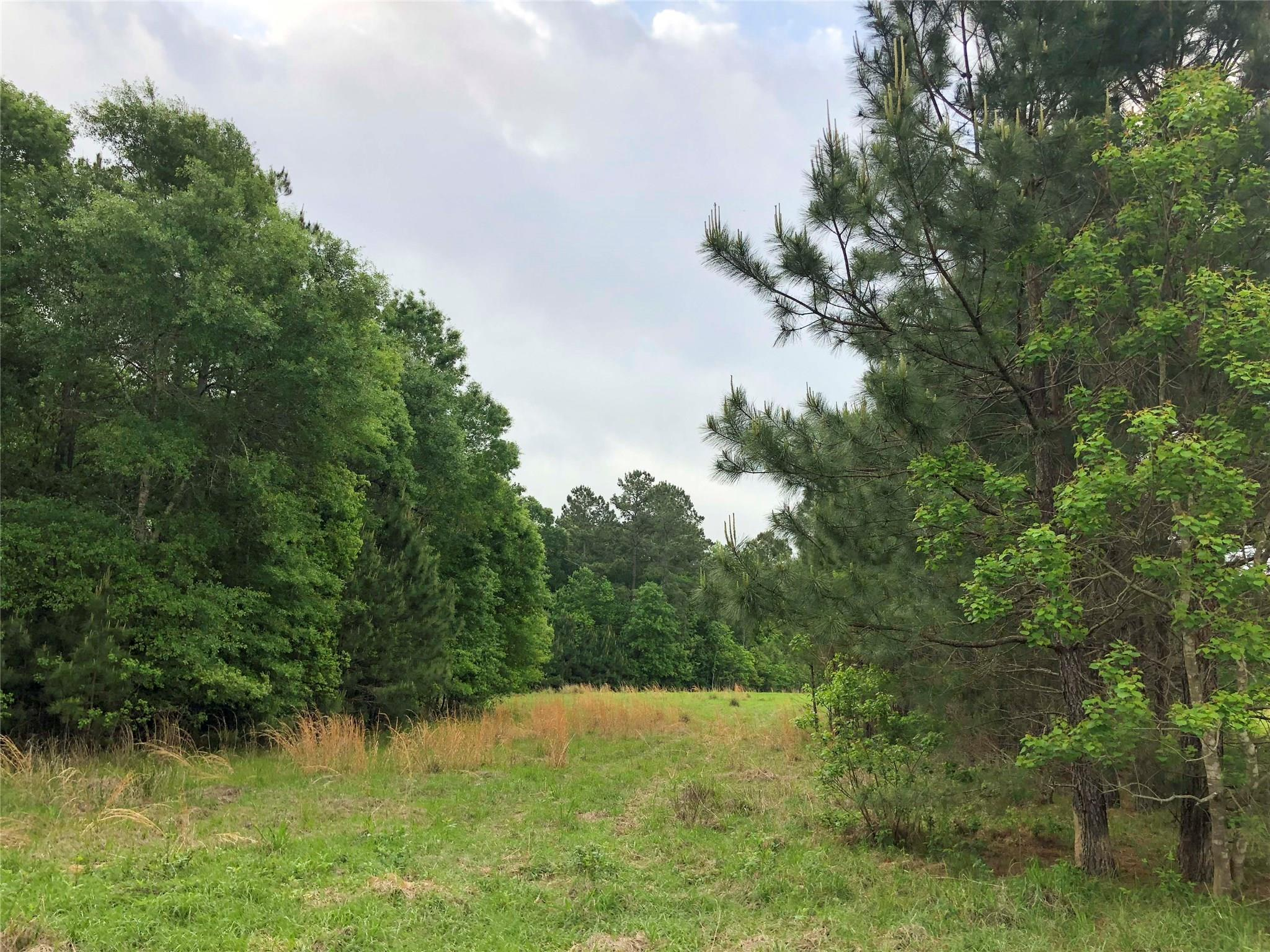0 County Road 2317 Property Photo - Dayton, TX real estate listing