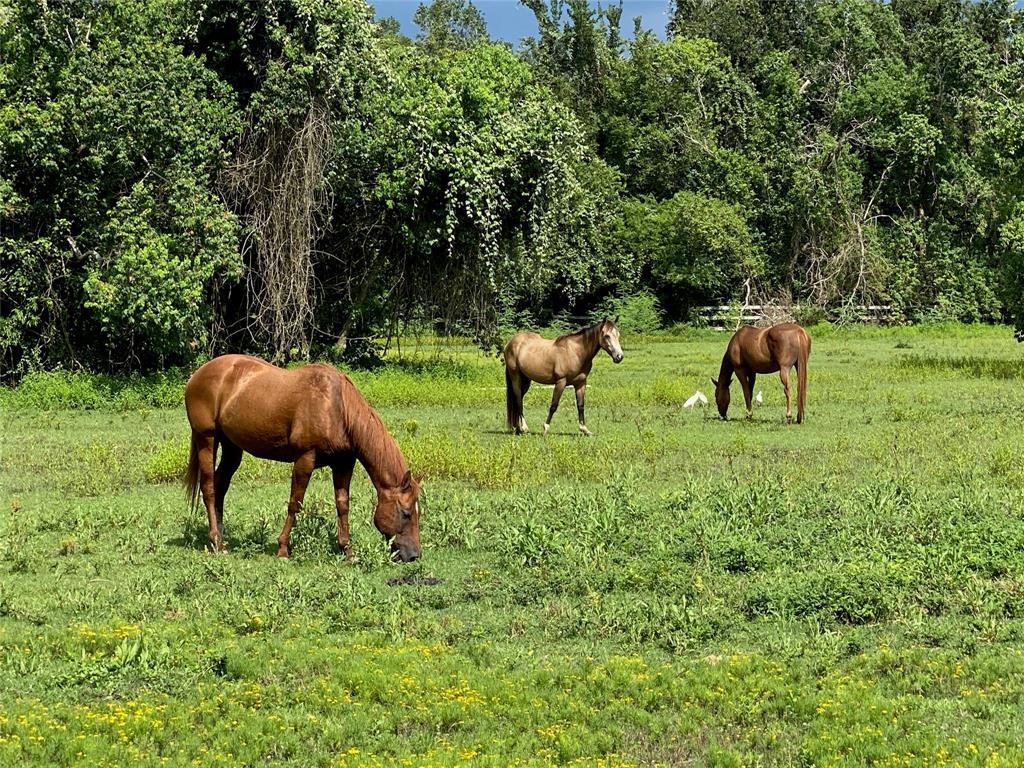 4435 Dagg Road Property Photo - Houston, TX real estate listing