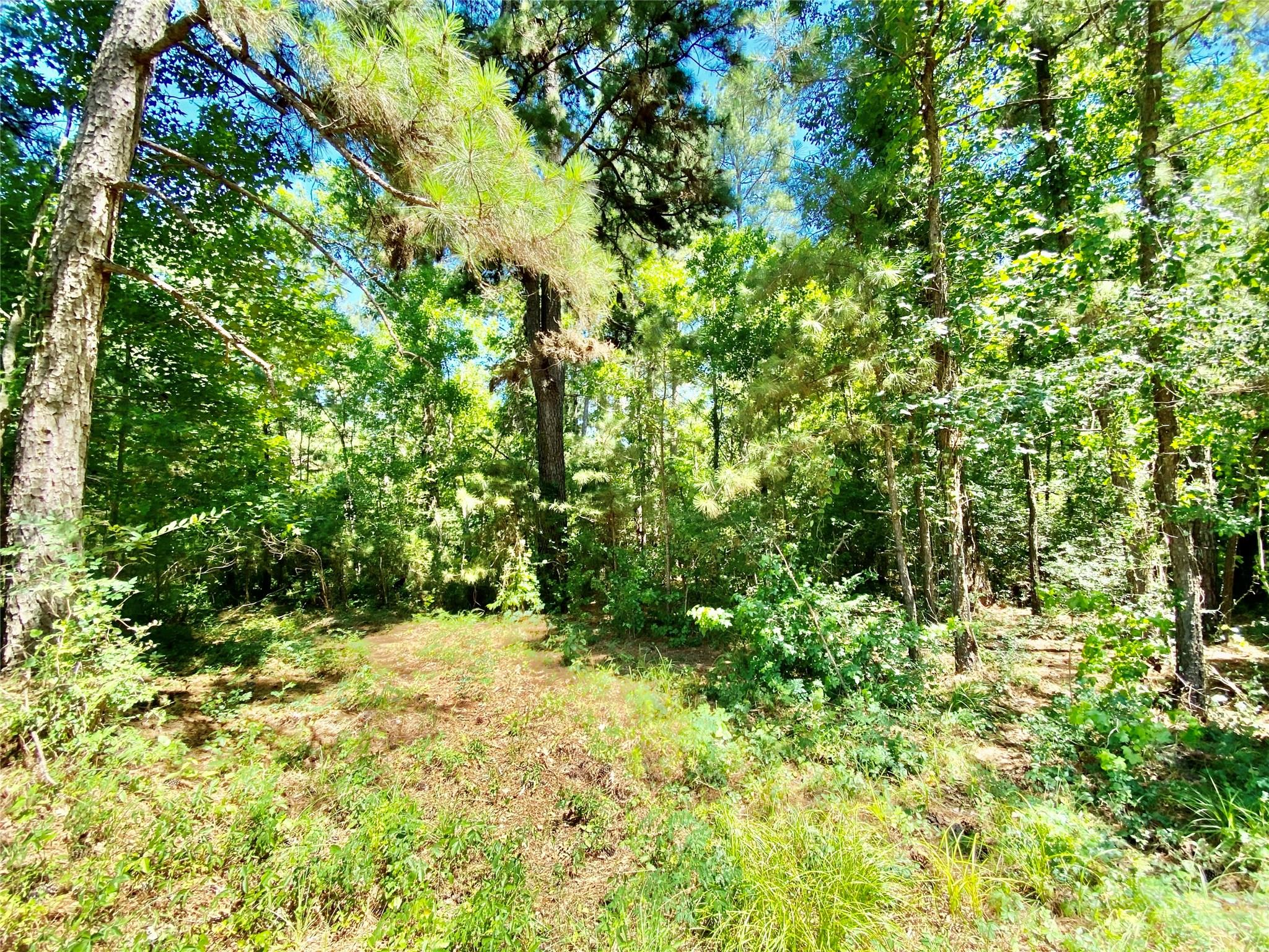 TBD Sam Martin Road Property Photo - Moscow, TX real estate listing