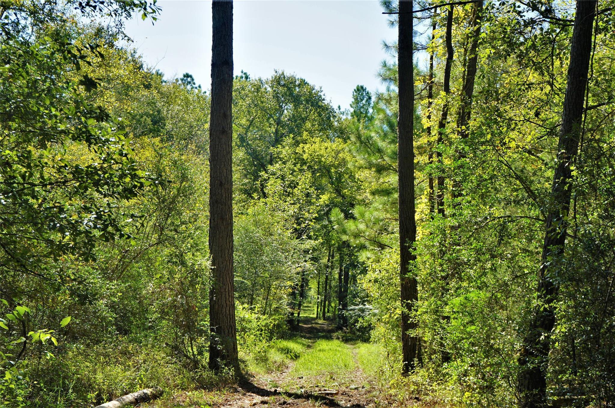 30 Fm 1486 Property Photo